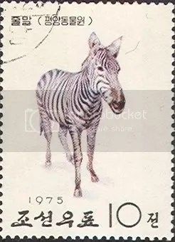 Zebra - North Korea