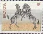 Zebra - Rwanda