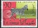 Zebra - Somalia?