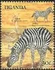 Zebras - Uganda