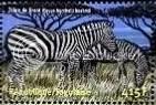 Zebras - Togo