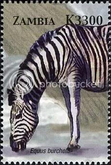 Zebra - Zambia