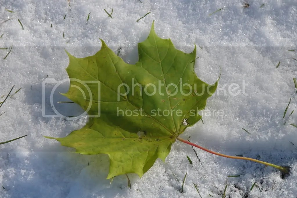 Leaf on the Snow (2009-10)