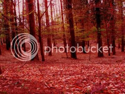 forest photo: Burning Forest BurningForest.jpg