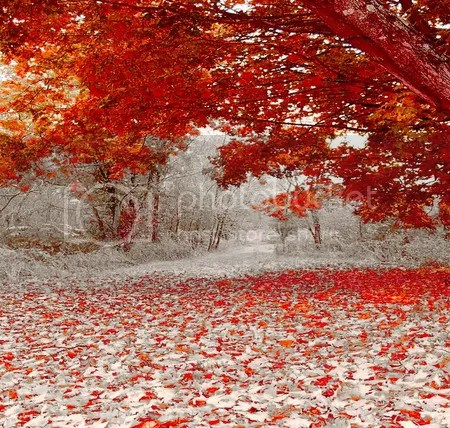 Autumn snow