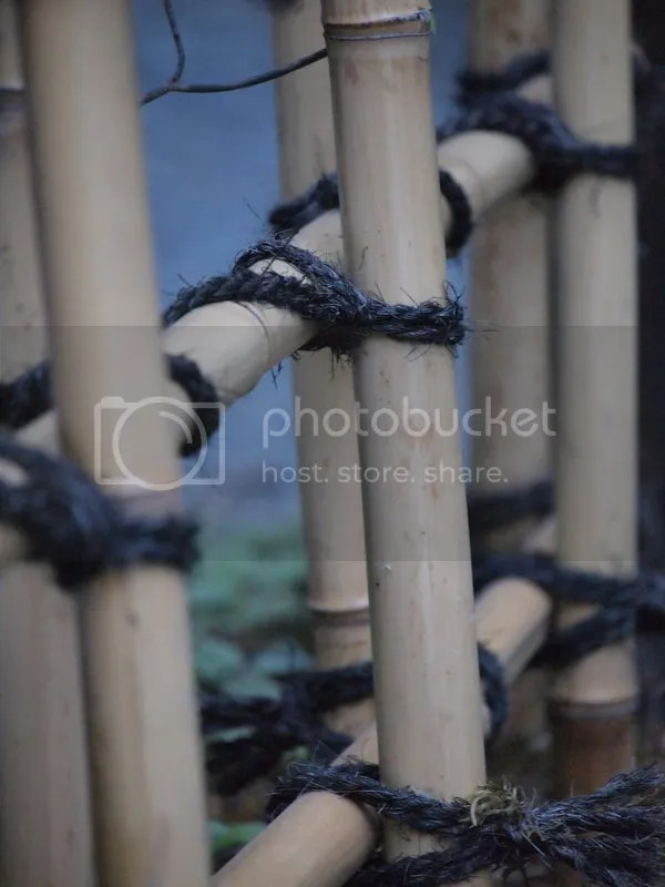 photo bamboo fence_zpsair3mohd.jpg