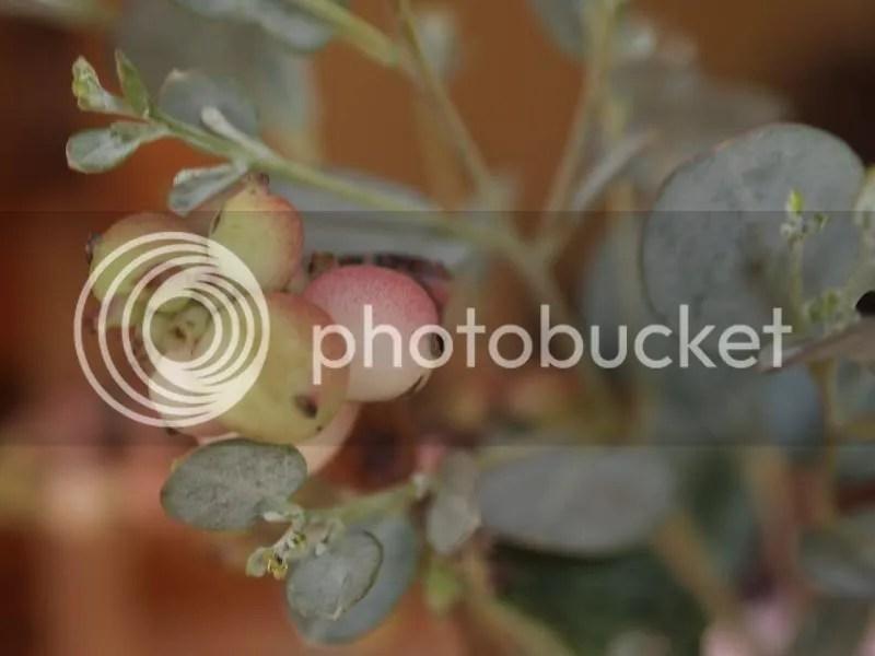 photo berries_edited_zpsc7a188b4.jpg