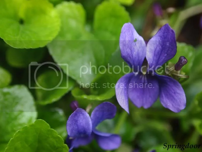 photo flower22013_zps9fc942df.jpg
