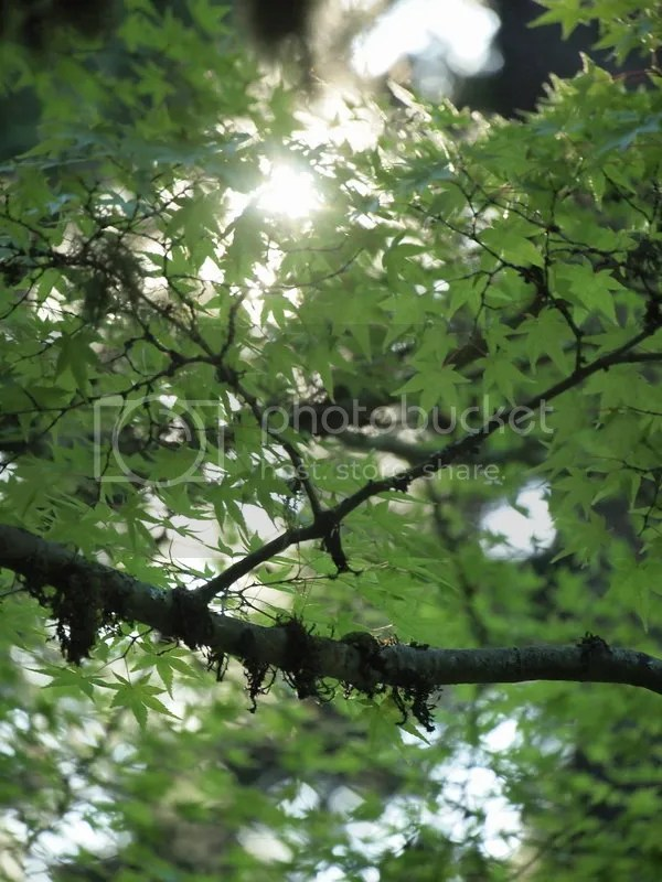photo light through the trees_zpsaljmepzn.jpg