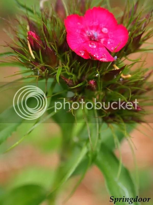 photo pinkflower2013_zps269a55f9.jpg