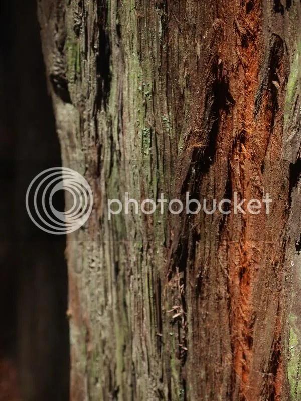 photo redwoodtreebark_zpsb4a5bd5a.jpg