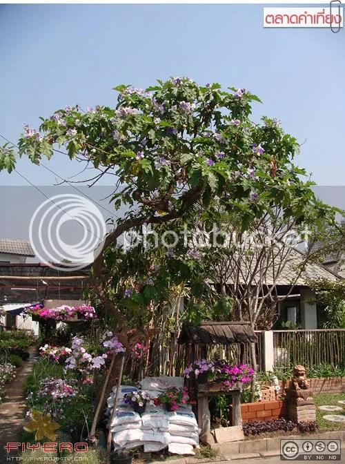 กาดคำเที่ยง, ตลาดคำเที่ยง, หลังโลตัส, ตลาดต้นไม้, ภาคเหนือ, เชียงใหม่, ต้นไม้, ดอกไม้