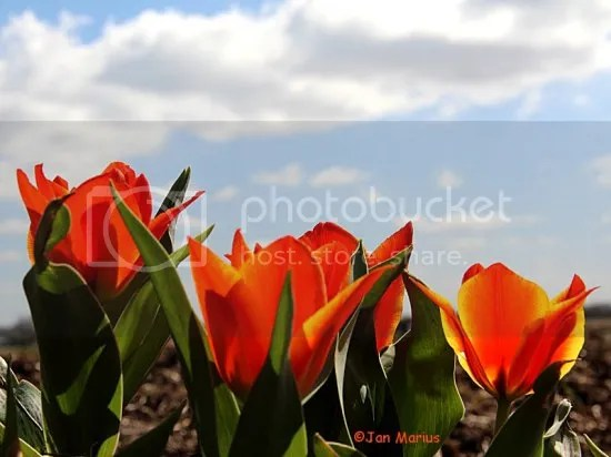 photo noordwijk3550_zps916709c3.jpg