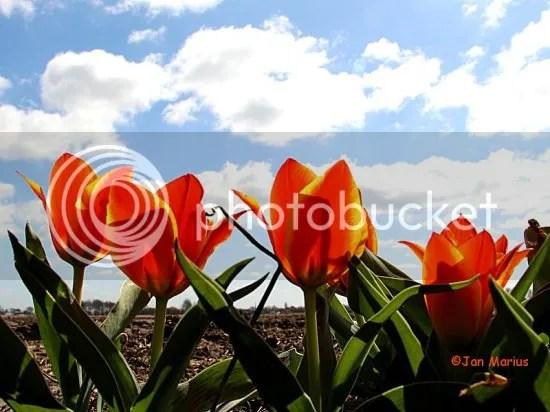 photo noordwijk4550_zpsc26d474f.jpg
