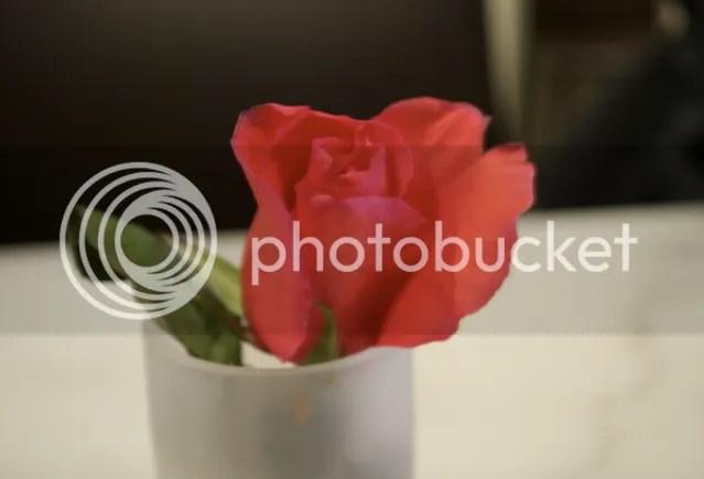 vday rose