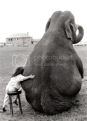 girl and elephant Pictures, Images and Photos