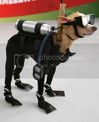 scuba dog Pictures, Images and Photos