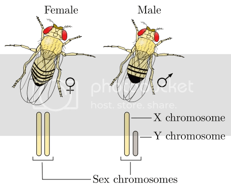 photo Bees and Gender ID_zps1twaaoqk.png