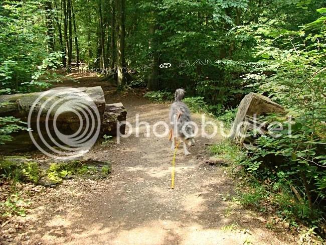 photo 2011-06-12-034_zpsf1fc2236.jpg