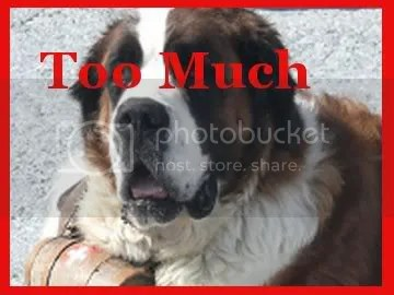 A St. Bernard is too Much