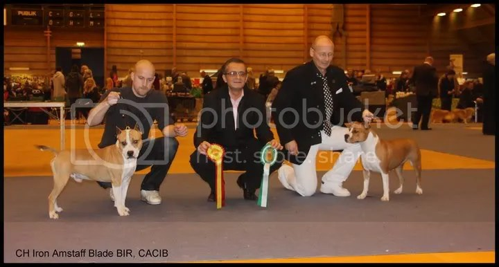 CACIB Växjö 06.11.2010 Judge Roberto Schill, Rumania -44 entries. BOB CH Iron Amstaff Blade. BOS Explozen´s Andromada Daughter of a King
