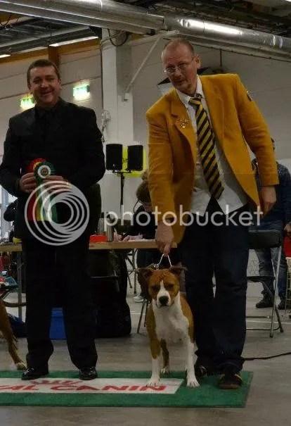 Amstaff specialist Rade Dakic. Terrier Derby entries 74