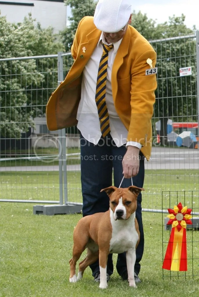 BEST OF BREED! -BIS- in the last seven. 2.6.2012