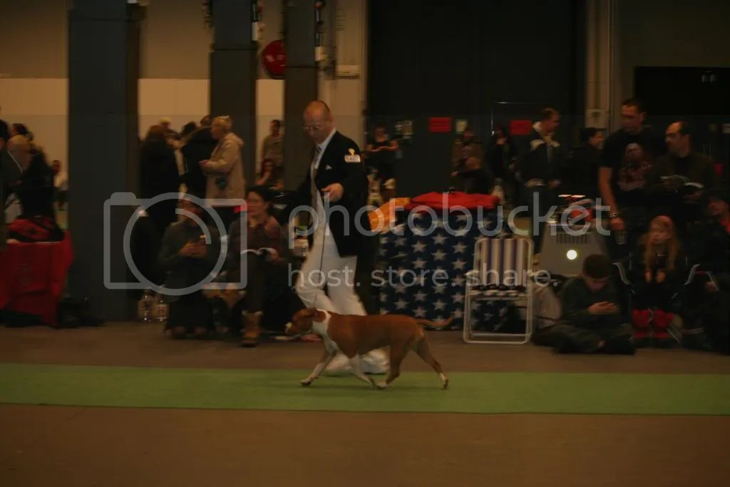 Stockholm Hundmässa 2010-12-19 CACIB Show