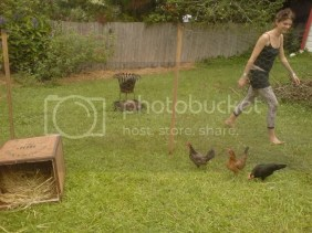 Katrina tries to contain the chickens