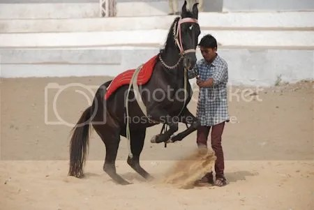 photo DSC_1902PushkarHorseWhisperer.jpg