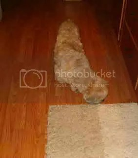 doggy vacuum