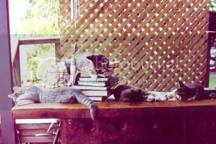 All the kittens sleeping on the bar