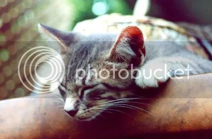 Combat Kitten Sleeping