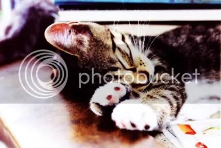 Flip Kitten Sleeping
