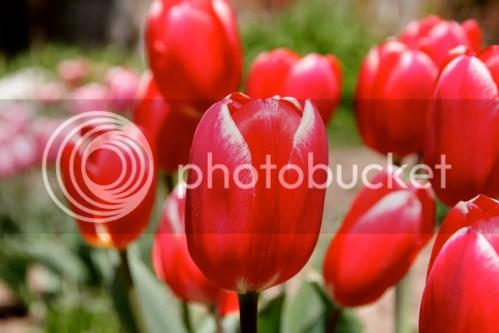 photo IMG_8582_zps11ab7b29.jpg