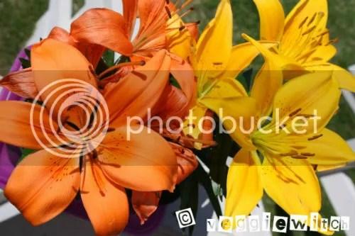 Hybrid Lillies 2
