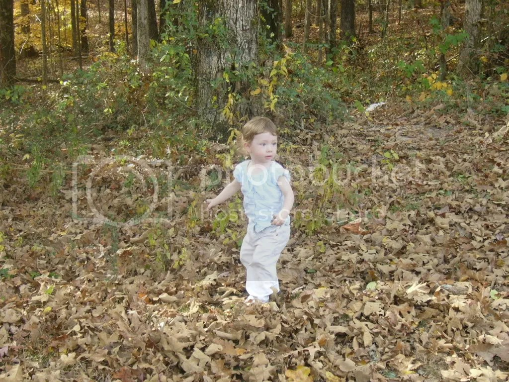 Cailey in the leaves photo Caileyleavesandsnow003.jpg