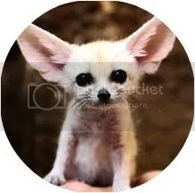 ears Pictures, Images and Photos