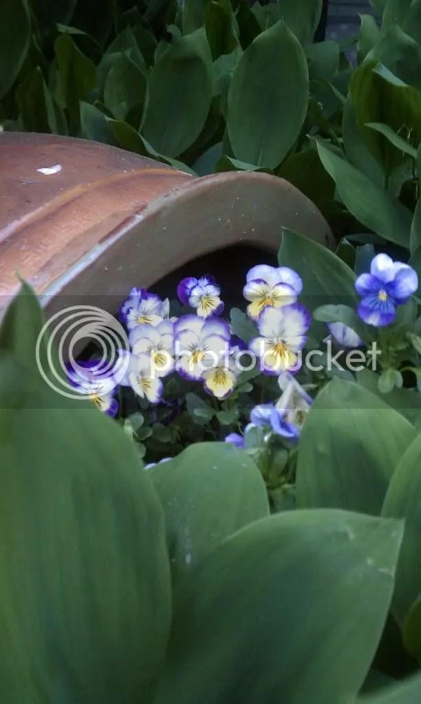 Feeling Blue?  Grow Some Green! - Photo by Annie Liza Bergen