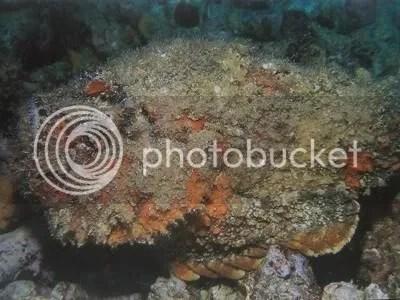 961540-Stone-Fish-1