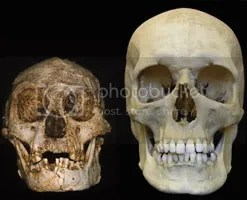 Hobbit skull next to Human.  Photo: Peter Brown