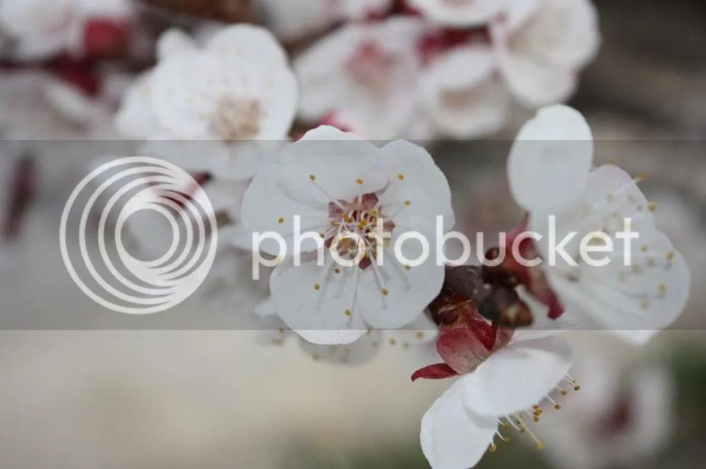 photo IMG_5226_zps8f2cf88a.jpg