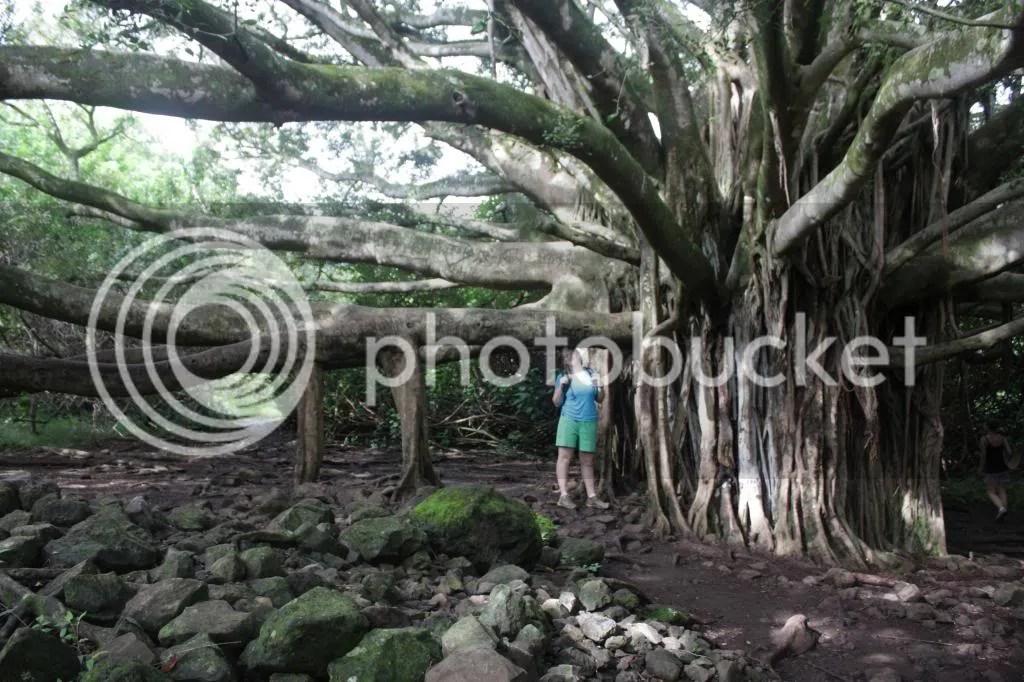 photo MauiTrip135_zps0dd1907c.jpg