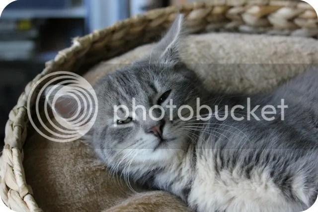 Vorige Week - Katten Stalken