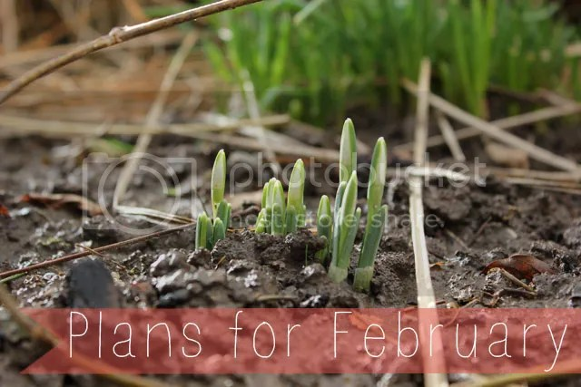 Plans for February