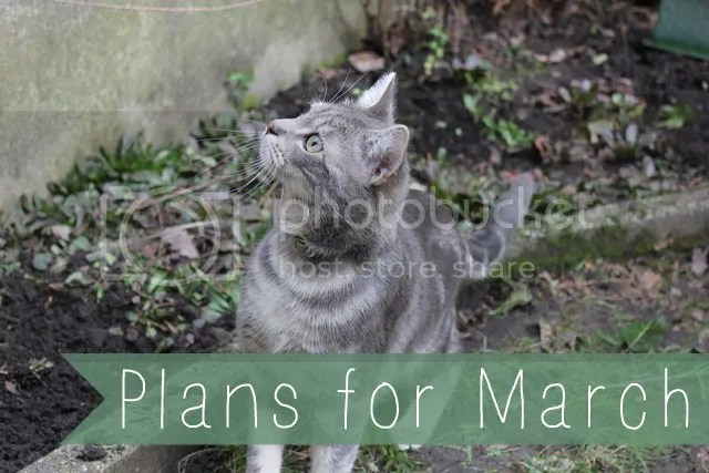Plans for March