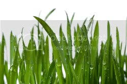 TLC Incorporated Lawn Sprinkler Systems