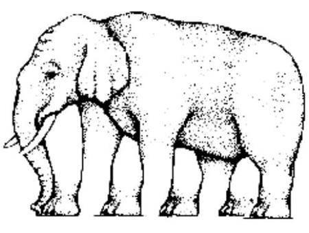 Wie viele Beine hat der Elephant?