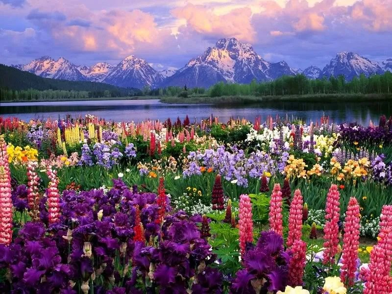 Image result for flowers in the valley photo