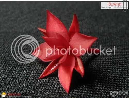 เข็มพิกุล, เข็มซ้อน, เข็มแดง, ดอกเข็ม, ต้นเข็ม, Ixora spp, ดอกสีแดง, ต้นไม้, ดอกไม้, akitia.com
